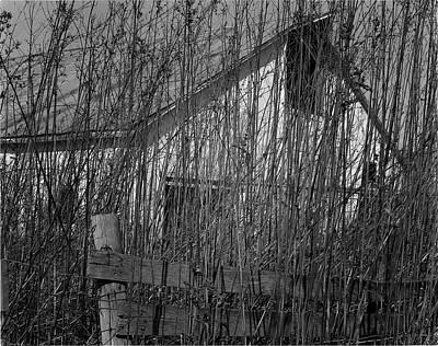 Behind The Weeds  Print by Dennis Sullivan