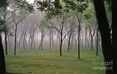 Beijing Trees I Original by Jon Cretarolo
