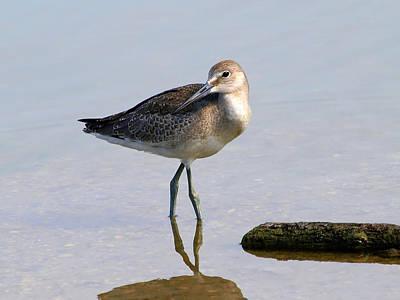 Rare Bird Sighting Photograph - Being Coy by Kala King