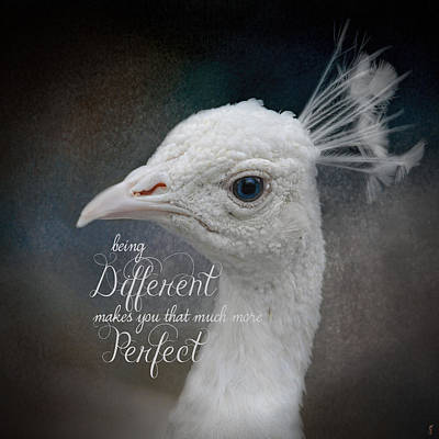 Photograph - Being Different - Peacock Art by Jai Johnson
