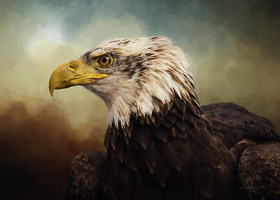 Photograph - Being Patient - Eagle Art by Jordan Blackstone
