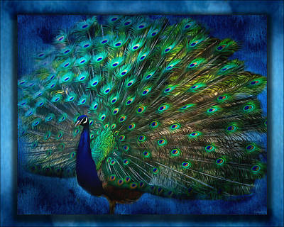 Painting - Being Yourself - Peacock Art by Jordan Blackstone