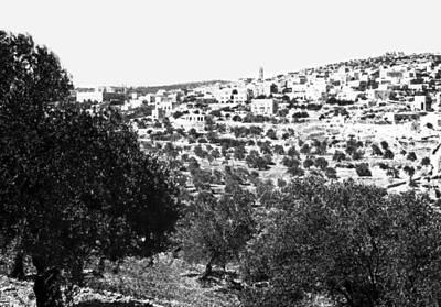 Photograph - Beit Jala 1950 by Munir Alawi