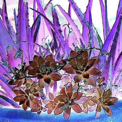 Photograph - Bejeweled Succulents by Ellen Barron O'Reilly