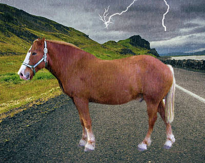 Photograph - Belgian Horse by Ericamaxine Price