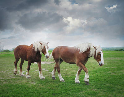 Photograph - Belgian Horses On A Hilltop by David and Carol Kelly