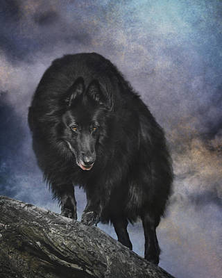 Sheepdog Photograph - Belgian Sheepdog Art 3 by Wolf Shadow  Photography
