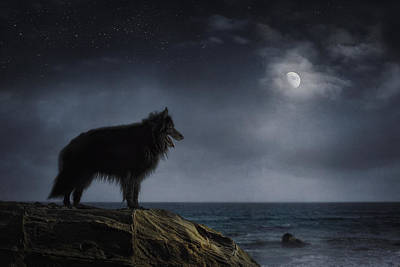 Sheepdog Photograph - Belgian Sheepdog Art 6 by Wolf Shadow  Photography