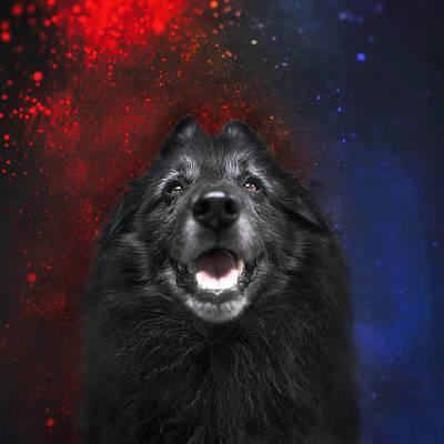 Sheepdog Photograph - Belgian Sheepdog Artwork 16 by Wolf Shadow Photography