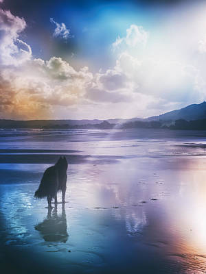 Sheepdog Photograph - Belgian Sheepdog Artwork by Wolf Shadow  Photography