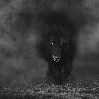 Sheepdog Photograph - Belgian Sheepdog Walking Through Mist. by Wolf Shadow  Photography
