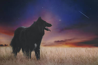 Sheepdog Photograph - Belgian Shepherd Artwork14 by Wolf Shadow Photography