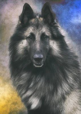 Sheepdog Photograph - Belgian Tervuren Portrait 1 by Wolf Shadow  Photography