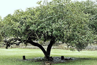 Photograph - Belize Tree by Linda Constant