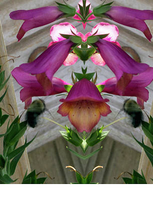 Photograph - Bell Flowers Pareidolia by Constantine Gregory
