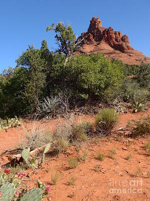 Photograph - Bell Rock With  Pink Blooming Cactus by Marlene Rose Besso