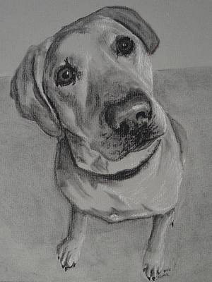 Chocolate Lab Drawing - Bella Bean Labrador Retriever by Ruthie Sutter