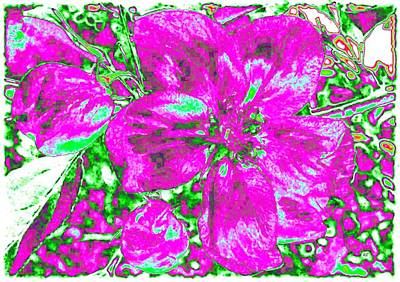 Royalty-Free and Rights-Managed Images - Bella Flora 2 by Will Borden