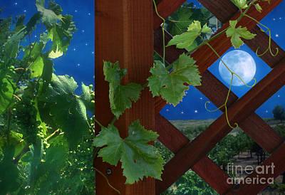 Grape Vines Photograph - Bella Sera by Stephanie Laird