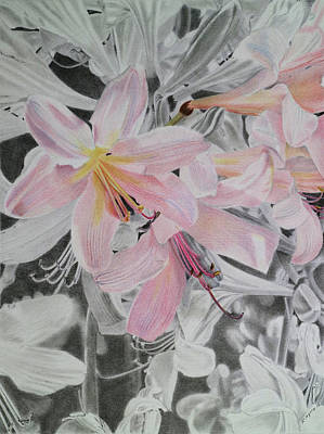 Amaryllis Drawing - Belladonna Lilies by Scott Kingery