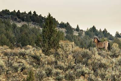 Photograph - Bella's Baby by Belinda Greb