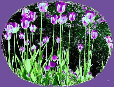 Digital Art - Belles Tulipes Au Printemps by Will Borden