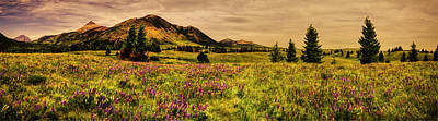 Photograph - Bellevue Meadow At Waterton Lakes National Park by Roger Passman