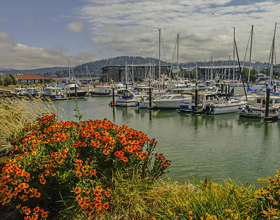 Photograph - Bellingham Harbor by Allen Sheffield