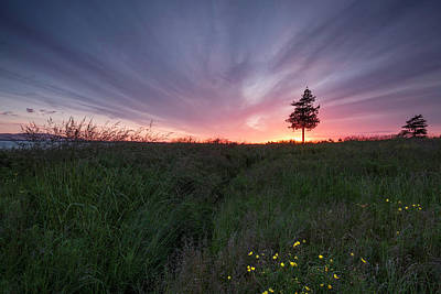 Locust Sunset Photograph - Bellingham Spring Sunset by Ryan McGinnis