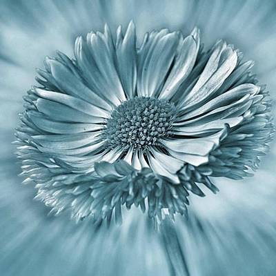 Green Wall Art - Photograph - Bellis In Cyan  #flower #flowers by John Edwards