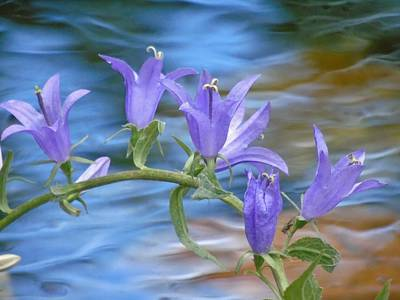 Photograph - Bells Over Water by Barbara St Jean