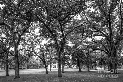 Mater Photograph - Beloit College Oak Grove by University Icons