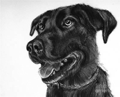 Drawing - Beloved Lab by Susan A Becker