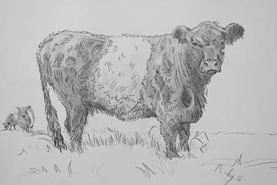 Drawing - Belted Galloway Cow Pencil Drawing by Mike Jory