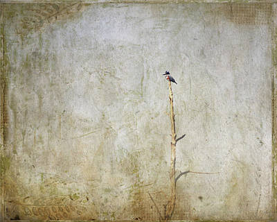 Belted Kingfisher Wall Art - Photograph - Belted Kingfisher by Al  Mueller