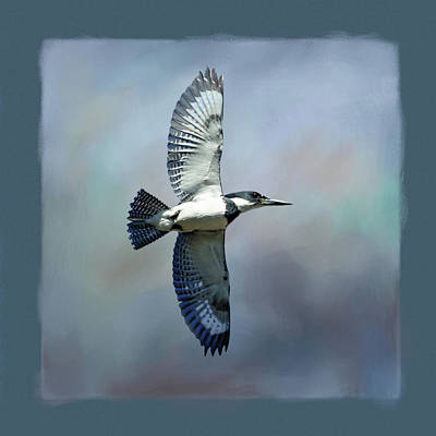 Photograph - Belted Kingfisher by Donna Kennedy
