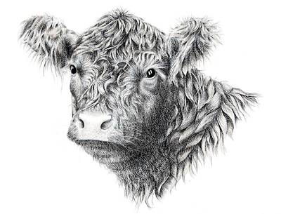 Cow Drawing - Beltie by Sandra Moore