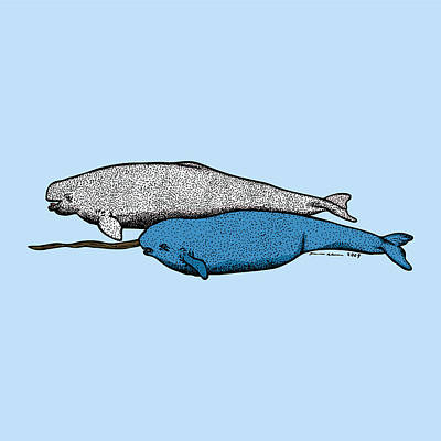 Beluga And Narwhal Whales Art Print by Karl Addison