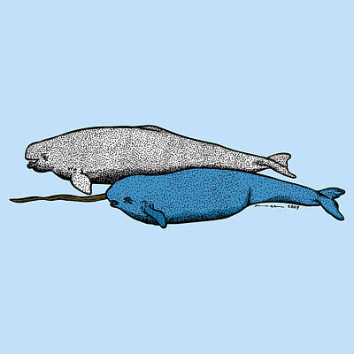 Beluge And Narwhal Whale - Color Print by Karl Addison