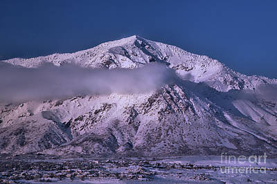 Photograph - Ben Lomond Winter by Roxie Crouch