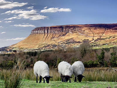Digital Art - Benbulben, Co. Sligo - Sheep Grazing At The Base Of The Mountain On A Sunny Spring Day by John Carver