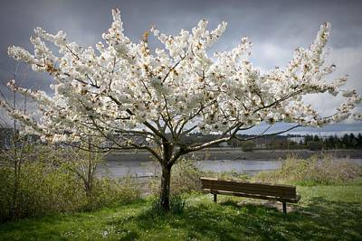 Bench And Blossoms Art Print