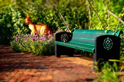Photograph - Bench And Kangaroo by Rodney Lee Williams