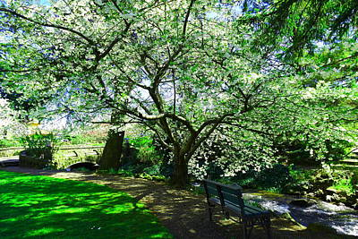 Park Benches Photograph - Bench And Tree In Bloom by Jeff Swan