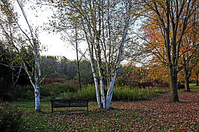 Photograph - Bench Between The Birches In Fall by Debbie Oppermann