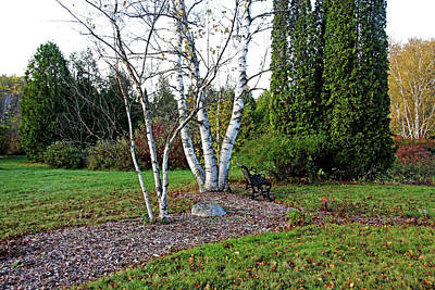 Photograph - Bench By The Birches In Autumn by Debbie Oppermann