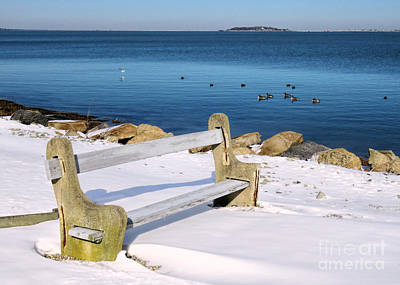 Photograph - Bench By The Harbor  by Janice Drew