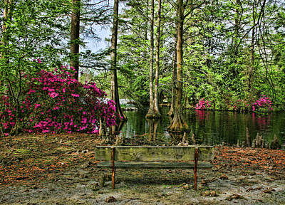 Photograph - Bench By The Lake by Cathy Harper