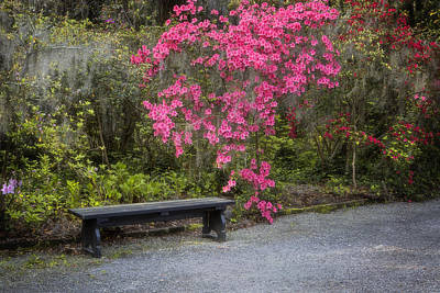 Bench In Azalea Garden Art Print
