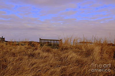 Photograph - Bench In Sea Grass by Lennie Malvone